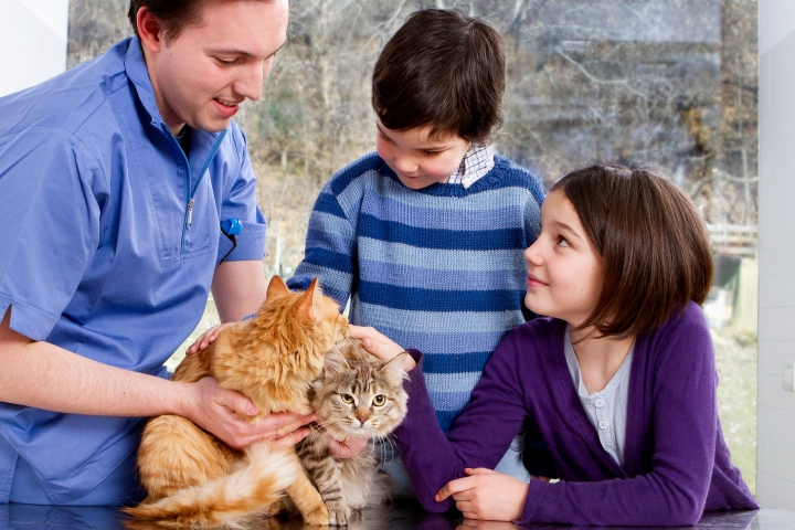 Vet talking to children with their cats